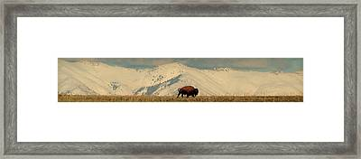 Domain.. Framed Print