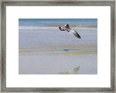 Domain Framed Print by JAMART Photography