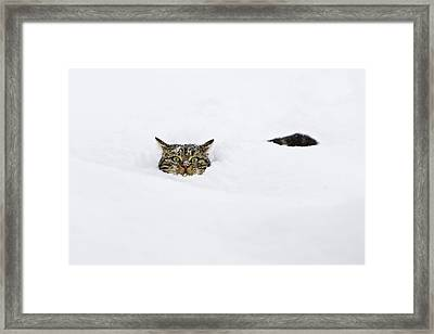 Domestic Cat Felis Catus In Deep Snow Framed Print