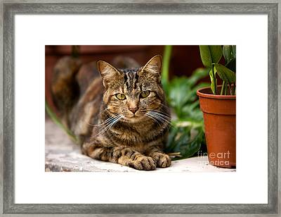 Domestic Cat With Plants Framed Print by Gerard Lacz