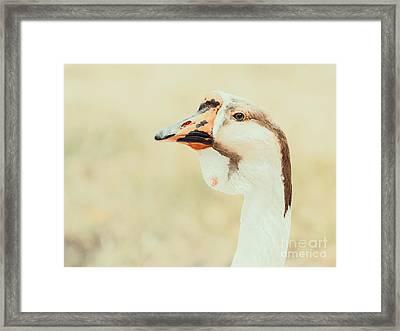 Domestic Farm Goose Portrait Framed Print by Radu Bercan