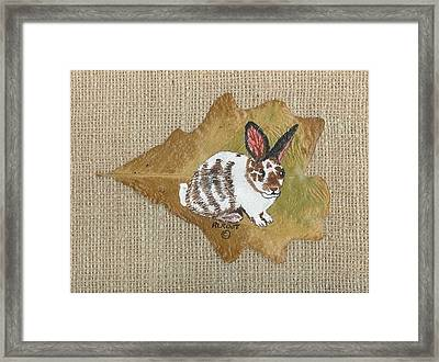 domestic Rabbit Framed Print