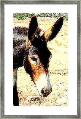 A Donkey Doesn't Need A Rider To Be Happy   Framed Print