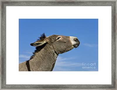Donkey Demanding A Treat Framed Print
