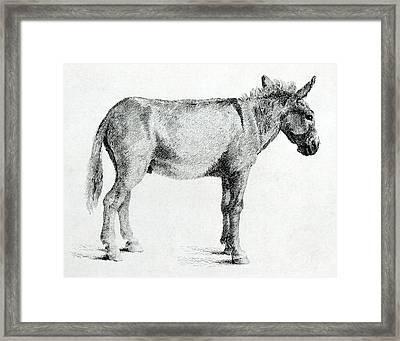 Donkey Framed Print by George Stubbs