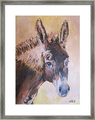 Donkey In The Sunlight Framed Print by Leonie Bell