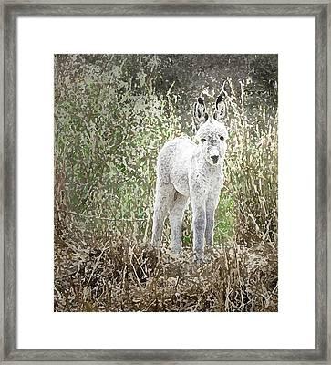 Donkey Foal Portrait Framed Print