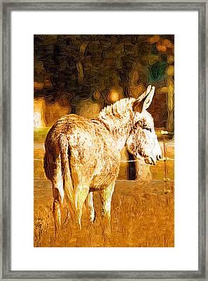 Donkey Framed Print by Paul Bartoszek