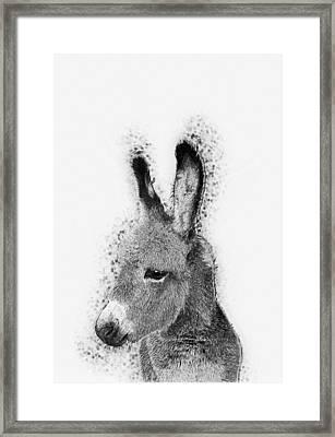 Donkey Framed Print by Taylan Apukovska
