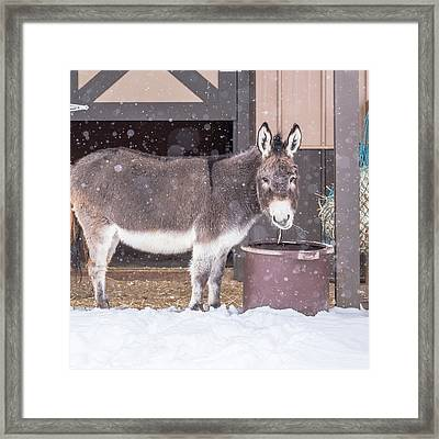 Donkey Watching It Snow Framed Print