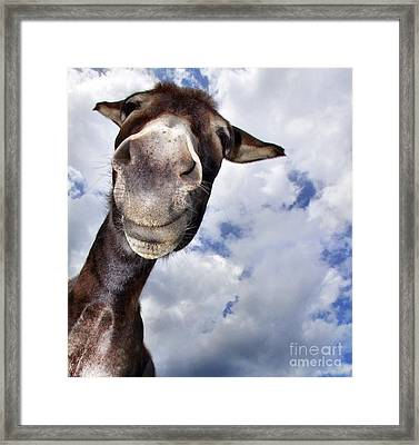 Donkey With Fun Framed Print by Claudia Otte