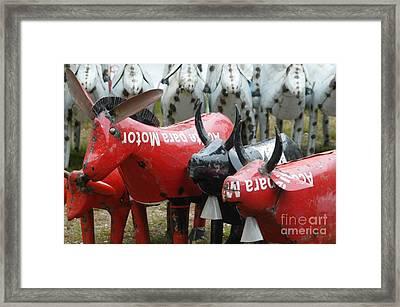 Donkeys And Bulls At Brimfield Framed Print by Amie Turrill Owens