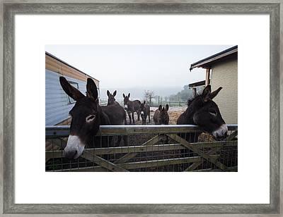 Donkeys Framed Print by Dawn OConnor