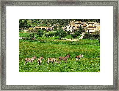 Framed Print featuring the photograph Donkeys In Provence by Olivier Le Queinec