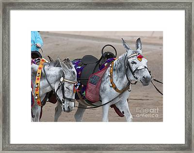 Donkeys On Blackpool Beach Framed Print by Andrew  Michael