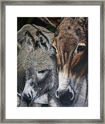 Donkies Framed Print by Katie McConnachie