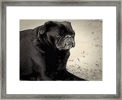 Donnas Bulldog Framed Print
