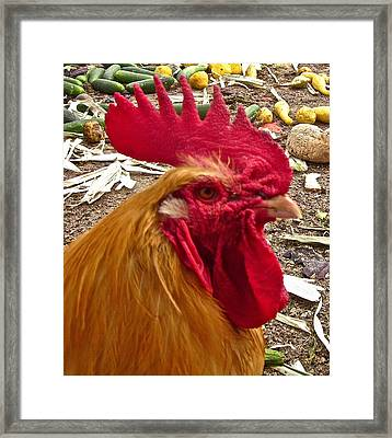 Dont Even Think About It Framed Print by Gwyn Newcombe
