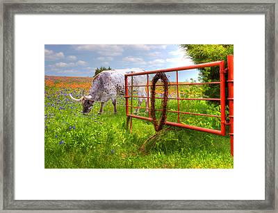 Dont Fence Him In Framed Print by David and Carol Kelly
