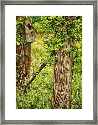 Don't Fence Me In Framed Print by Priscilla Burgers