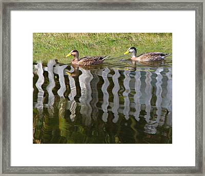 Don't Fence Us In Framed Print by Kathy M Krause