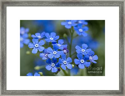 Don't Forget Framed Print