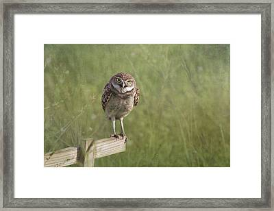 Don't Get Too Close Framed Print