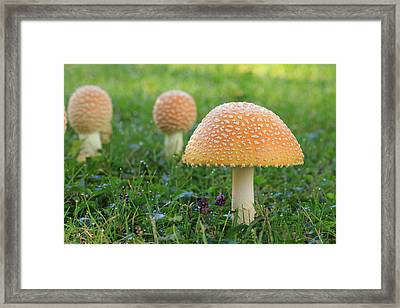 Don't Grill Me Framed Print by Lori Deiter