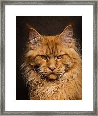 Don't Mess With Me. Framed Print