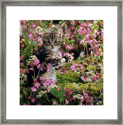 Don't Pick The Flowers Framed Print