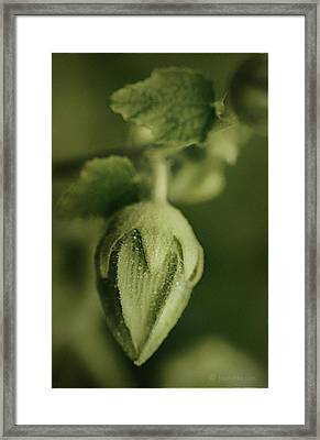 Don't Really Know.... Framed Print