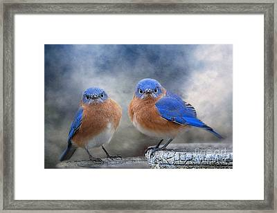 Don't Ruffle My Feathers Framed Print
