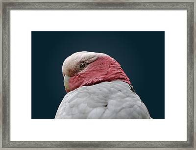 Don't Sneak Up On Me Framed Print