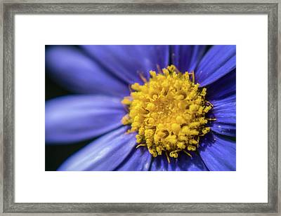 Dont Sneeze Framed Print by Scott Campbell