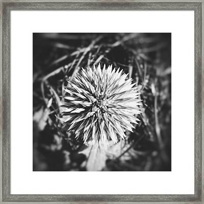Don't Touch Me Framed Print
