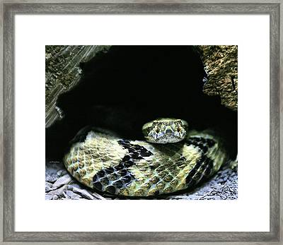Don't Tread On Me Framed Print by JC Findley