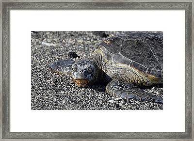 Framed Print featuring the photograph Don't Wake Me Up by Pamela Walton