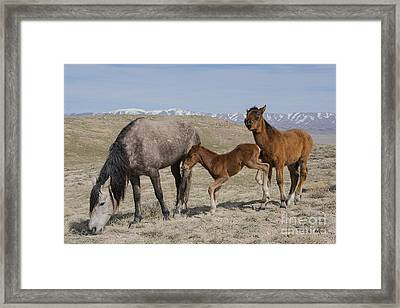 Don't Worry Mom I Got This... Framed Print by Nicole Markmann Nelson