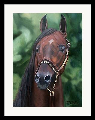Horse Portraits Framed Prints