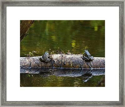Don't You Love Mornings Like This Framed Print