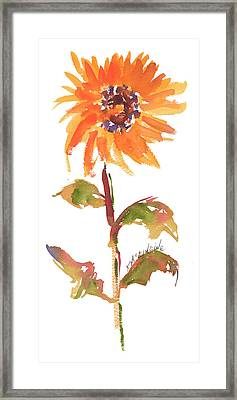 Door Keeper Sunflower Watercolor Painting By Kmcelwaine Framed Print