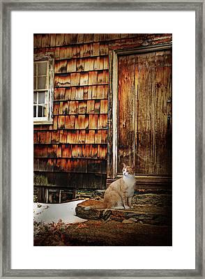 Door Step Cat Framed Print by Diana Angstadt