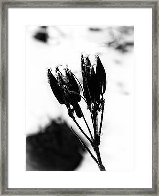 Dormant Framed Print