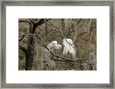 Doting Couple Framed Print