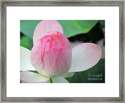 Dotus On The Lotus  Framed Print