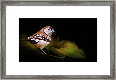Double Barred Finch Artwork 8948 Framed Print