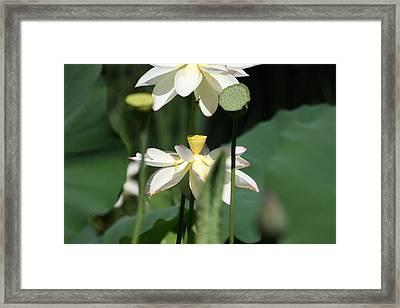 Double Blossom Framed Print by Dawn Davis
