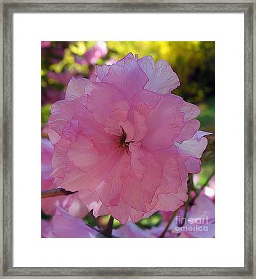 Double Blush Framed Print