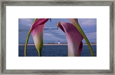 Double Calas Framed Print by Tony Chimento