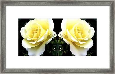 Double Cream Roses Framed Print